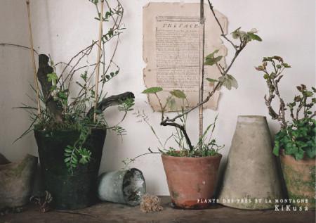 KiKusa-野と山の鉢植えDM-表